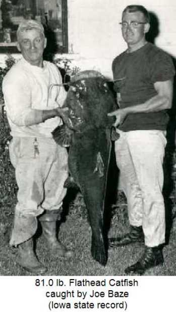 Iowa State Record Catfish caught in 1958 by Joe Baze at Lake Ellis in Chariton Iowa